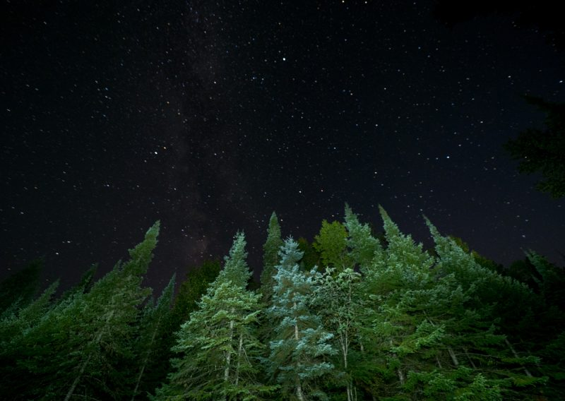 Boreal Forest at Night - Photo Credit Zach Pierce