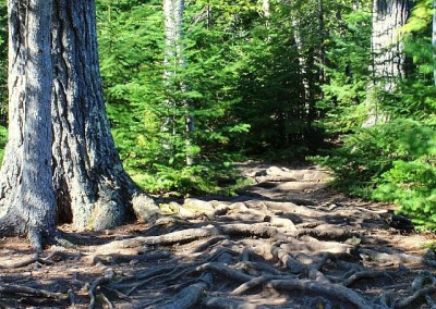 Superior Hiking Trail Roots - Photo Kelly Doyle